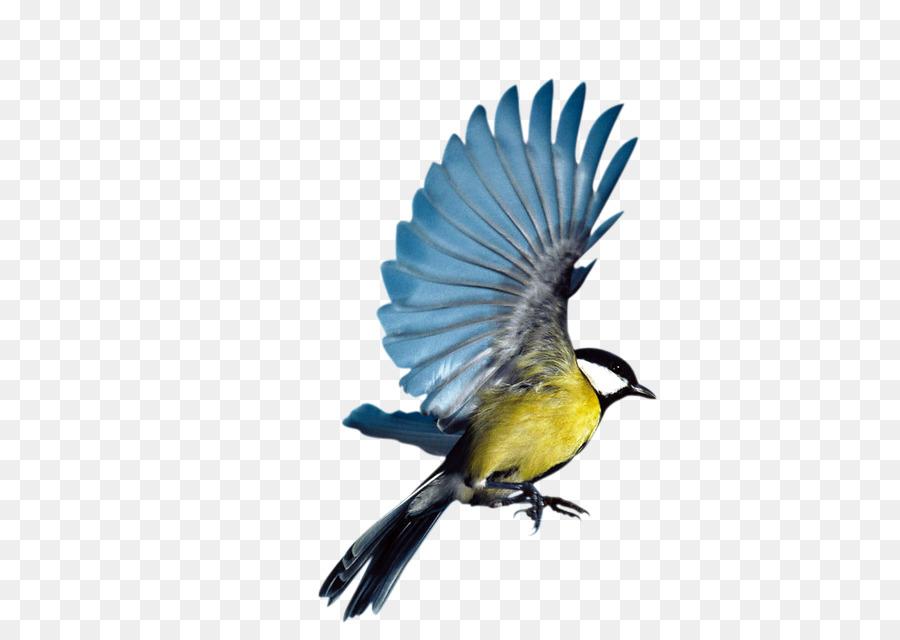 Bird Parrot png download - 620*623 - Free Transparent Bird