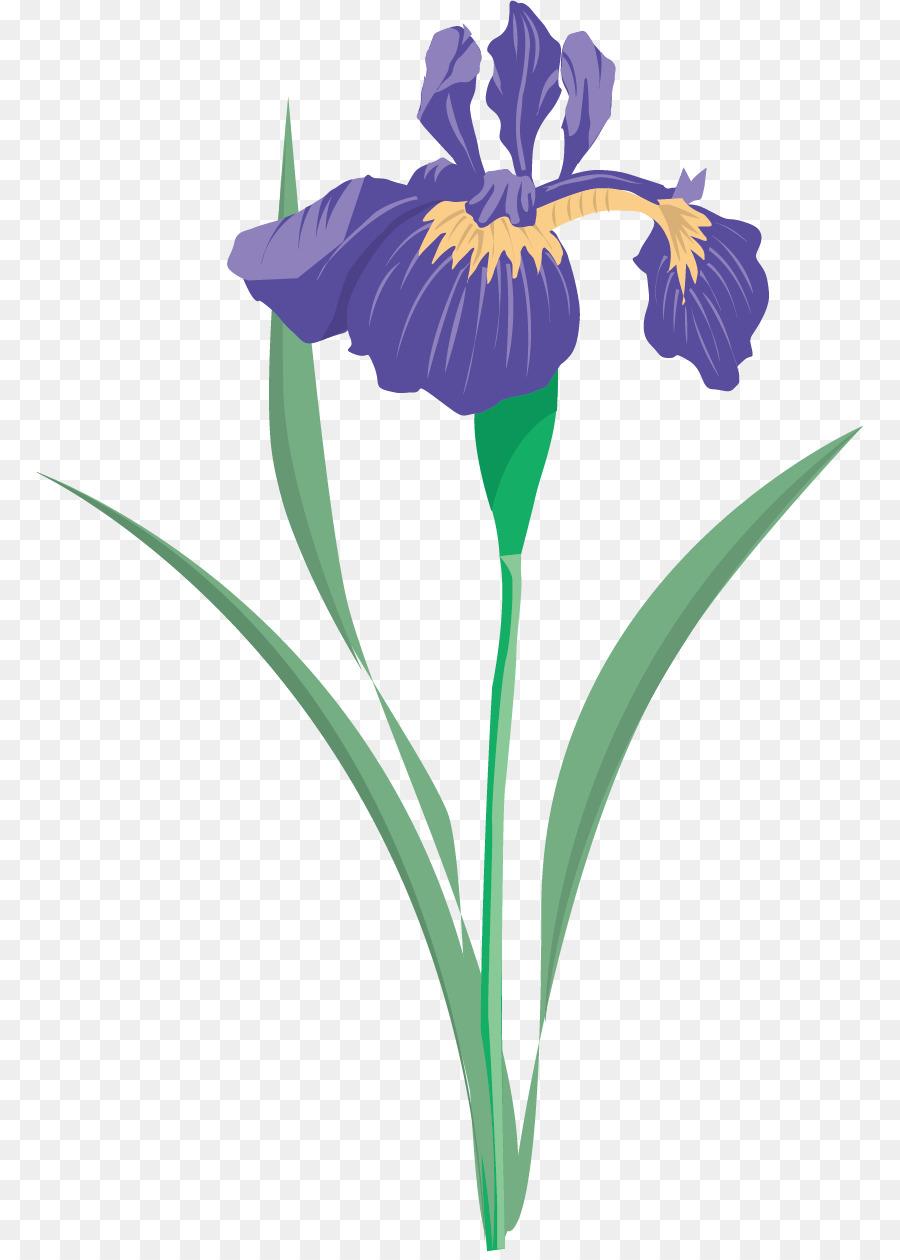 Iris versicolor iris flower data set clip art floral pattern iris versicolor iris flower data set clip art floral pattern material picture izmirmasajfo