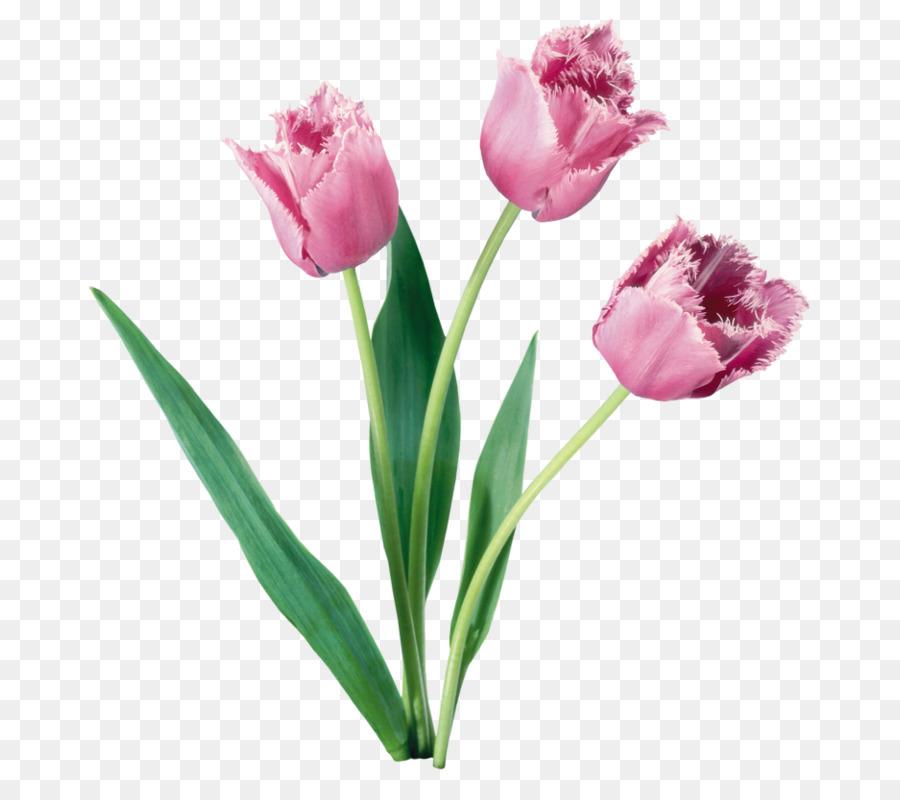 Tulip Flower bouquet Bulb - Decorative cartoon floral background ...