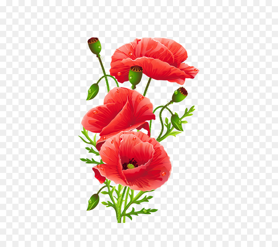 Common Poppy Flower Red Hand Painted Watercolor Red Floral