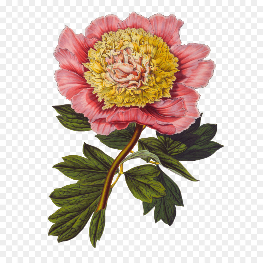 Gongbi Botanico Ilustracao Ilustracao Flor Floral Flores Material