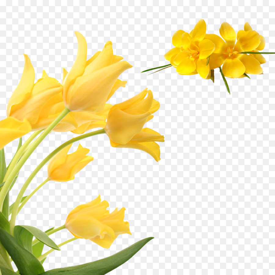 Flower Yellow Petal Yellow Floral Decoration Pattern Png Download