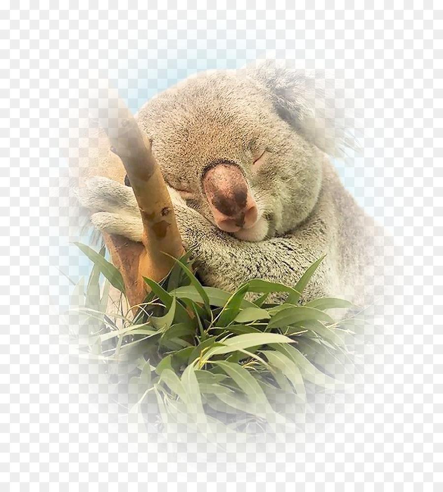Bebé Koala Animal Marsupial De La Vida Silvestre - Floral vector ...