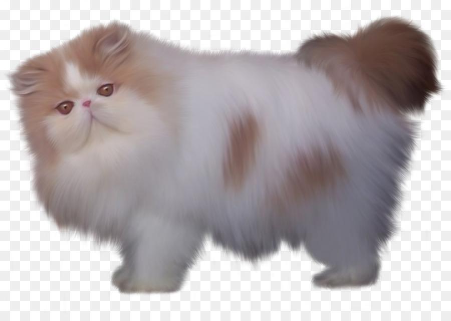 Persian Cat British Semi Longhair Minuet Cat Turkish Angora Siamese