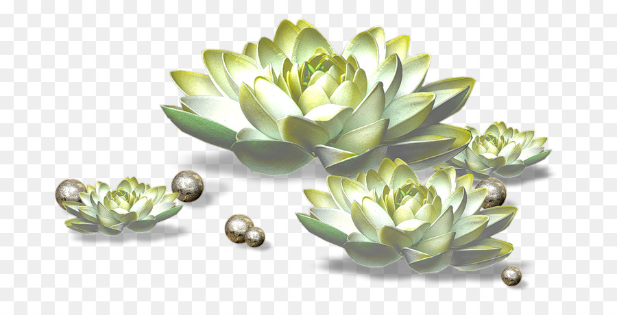 Line Drawing Of Rose Plant : Photography clip art decorative floral line drawing icon png
