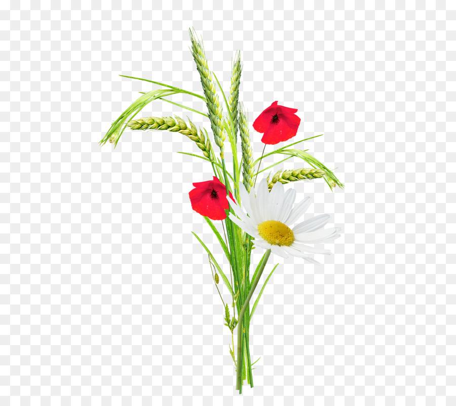 Poppy flower clip art cartoon creative flower plant wheat png poppy flower clip art cartoon creative flower plant wheat mightylinksfo