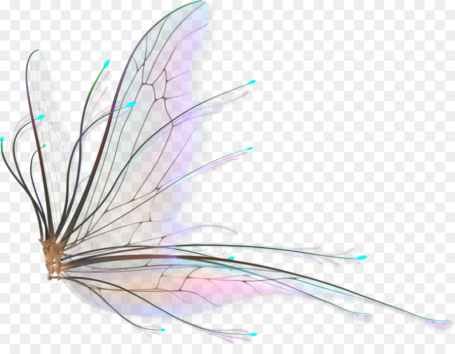 fairy wings drawing butterfly png download 21231607