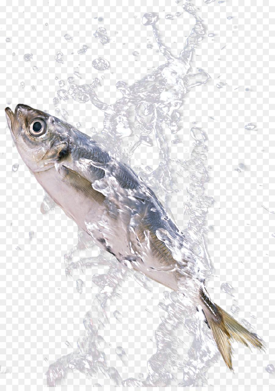 sardine fish download fish in the splash png download 909 1280