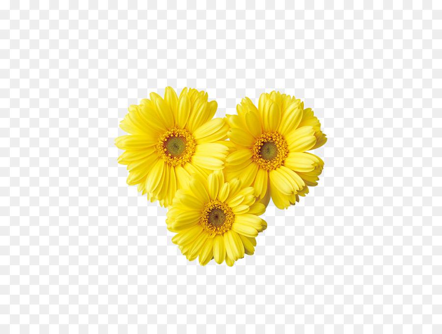 Common daisy yellow transvaal daisy clip art bright flowers png common daisy yellow transvaal daisy clip art bright flowers mightylinksfo