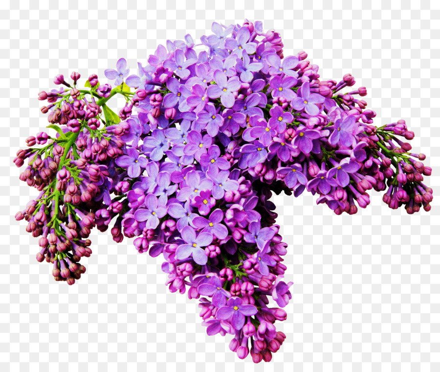 Lilac Flower Albom Clip art - A bouquet of beautiful flowers png ...