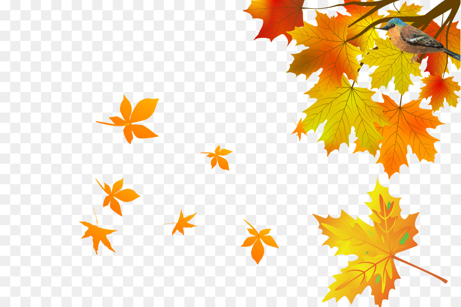 Maple Leaf, Leaf, Autumn, Tree PNG