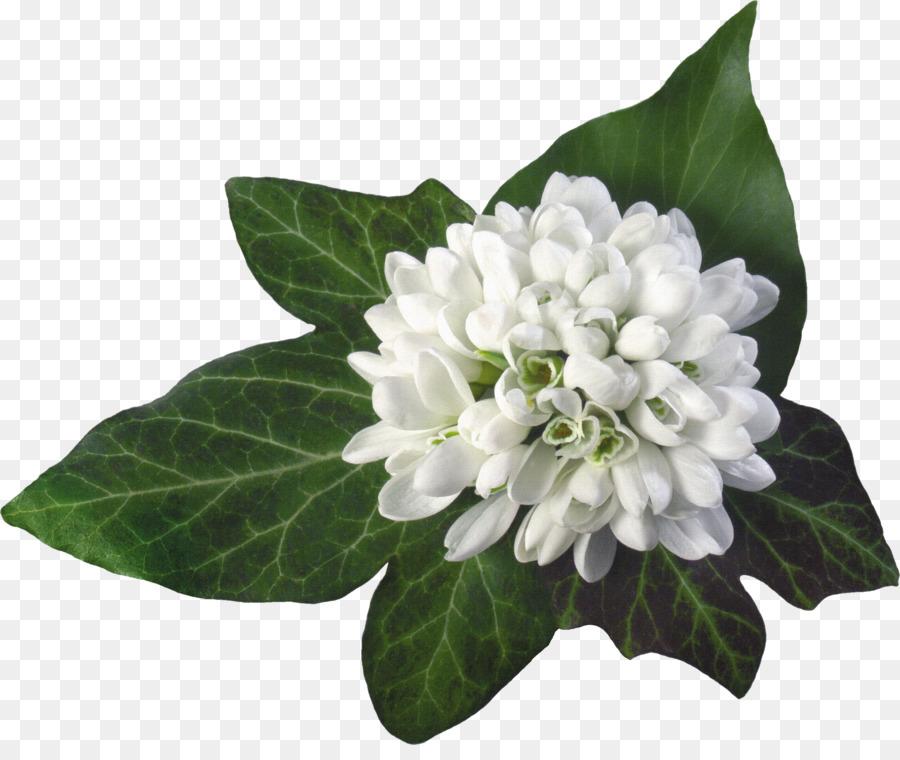 Baba marta greeting card march february 29 holiday bouquet of baba marta greeting card march february 29 holiday bouquet of white material m4hsunfo