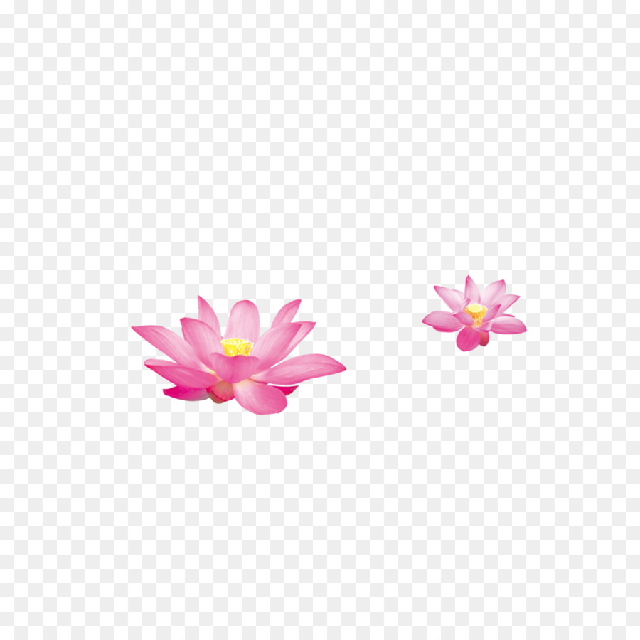 Nelumbo Nucifera Sina Corp Hand Painted Lotus Png Download 2362