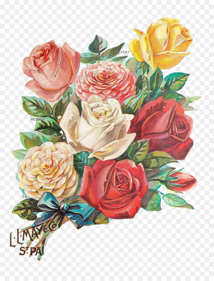 Rose Flower Illustration - Color Vintage Rose Greeting Card png ...