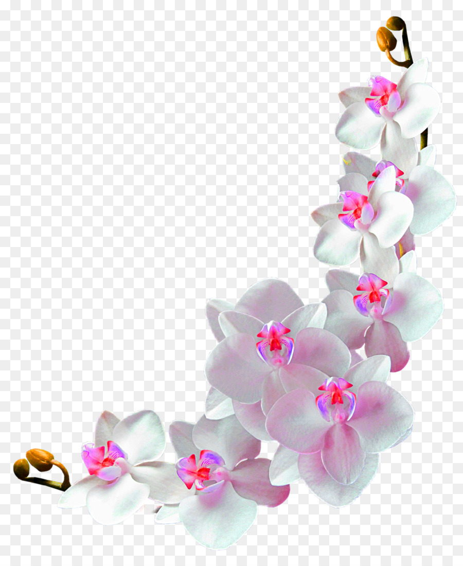 Orchids Film frame Photography Clip art - Flower vine ...