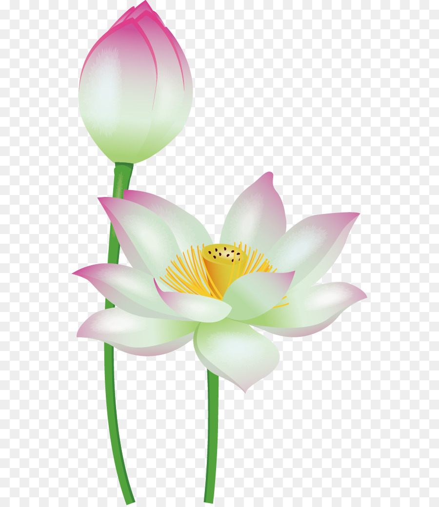 Nelumbo Nucifera Download Cute Cartoon Flowers Png Download 606
