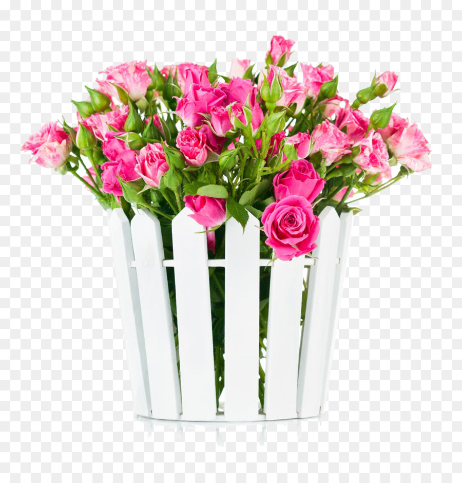 Seed Pink Color Flower White Rose In Bloom Pictures Png Download