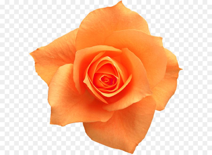 Rose yellow flower clip art orange roses png download 658658 rose yellow flower clip art orange roses mightylinksfo