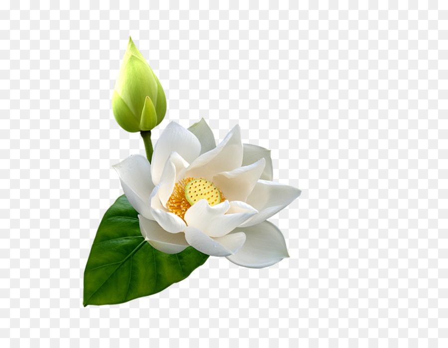 Flower Clip Art Lotus Bud Png Download 1000771 Free