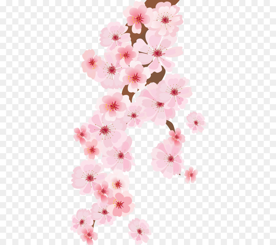 Business card - Plum flower png download - 800*800 - Free ...