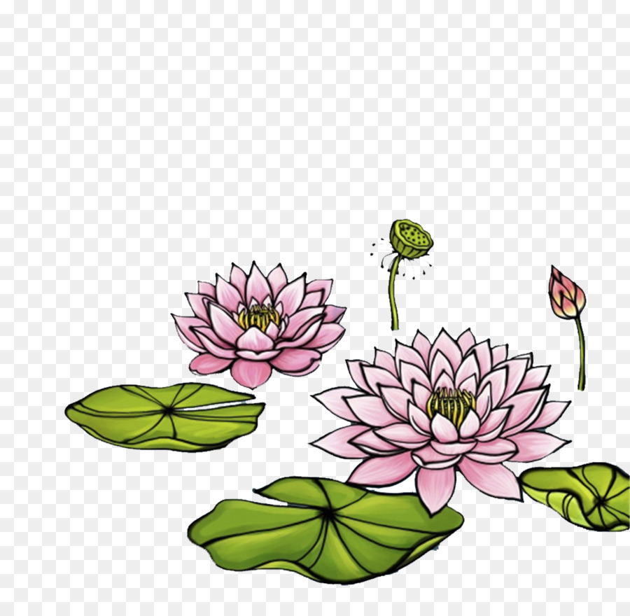 Illustration Hand Painted Lotus Png Download 12801241 Free