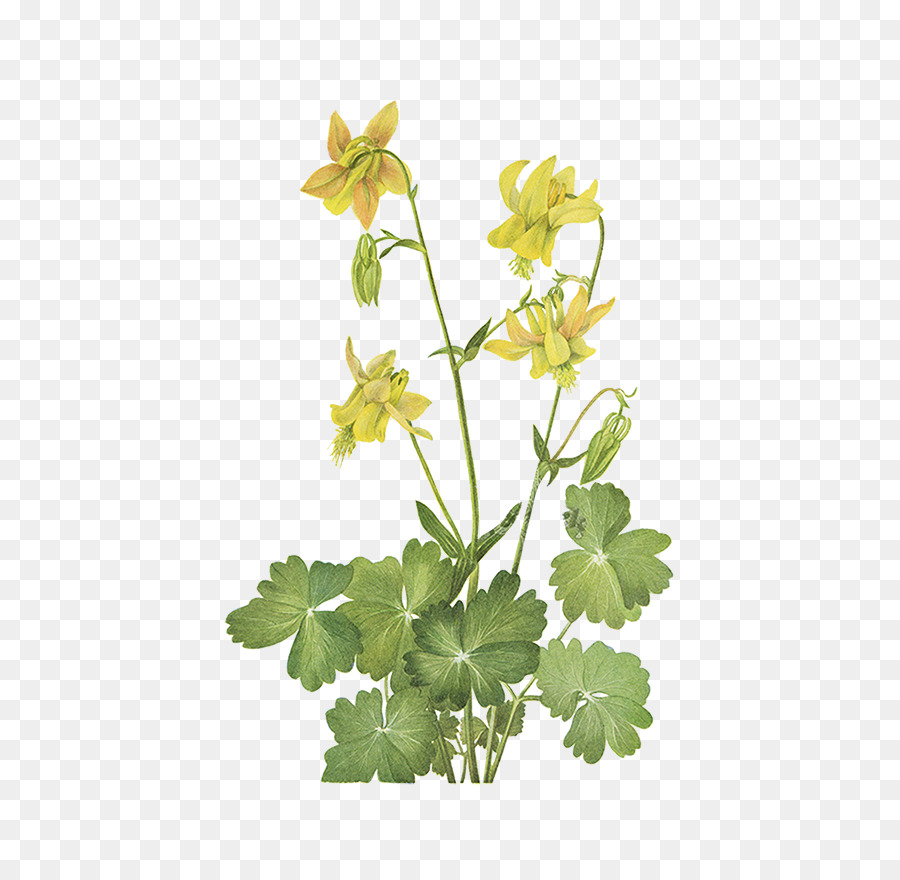 China Wild Flowers Of America Yellow Wildflowers Of The Pacific