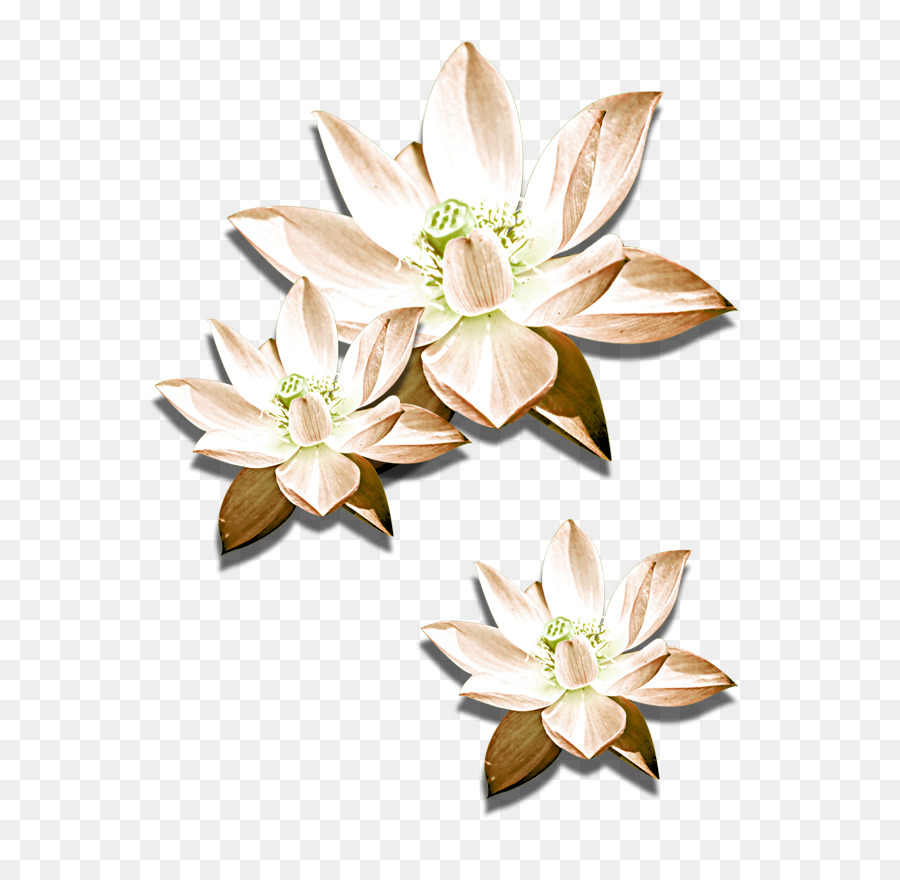 Cut Flowers Nelumbo Nucifera Icon Hand Painted Lotus Png Download