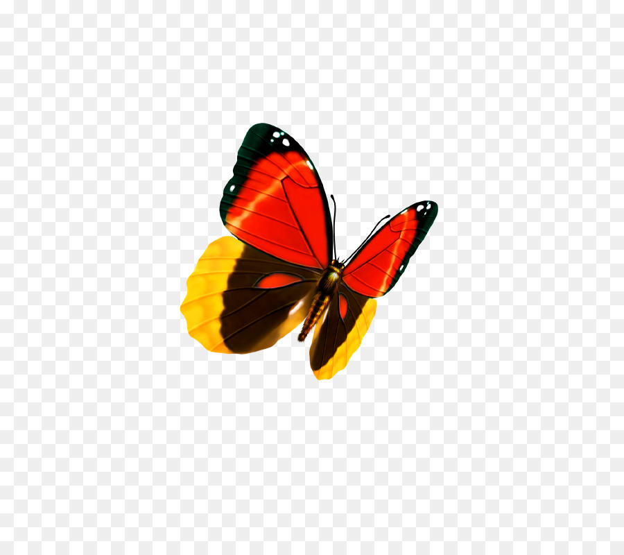 Butterfly Graphic design Business card - butterfly png download ...