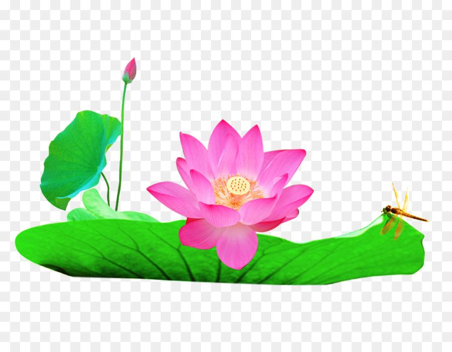 Nelumbo nucifera watercolor painting u82b1u854a lotus lotus leaf nelumbo nucifera watercolor painting u82b1u854a lotus lotus leaf album mightylinksfo