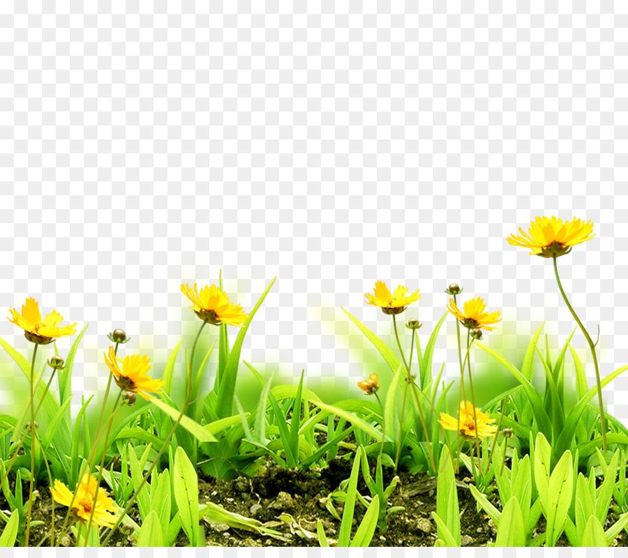 Meadow flower sky grass floral background png download 19491697 meadow flower sky grass floral background mightylinksfo