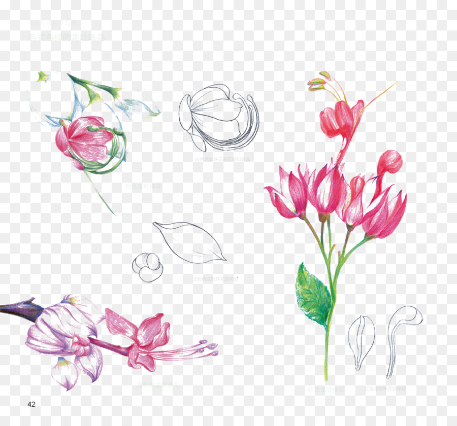Floral design Flower - Hanging bell flower anatomy picture material ...