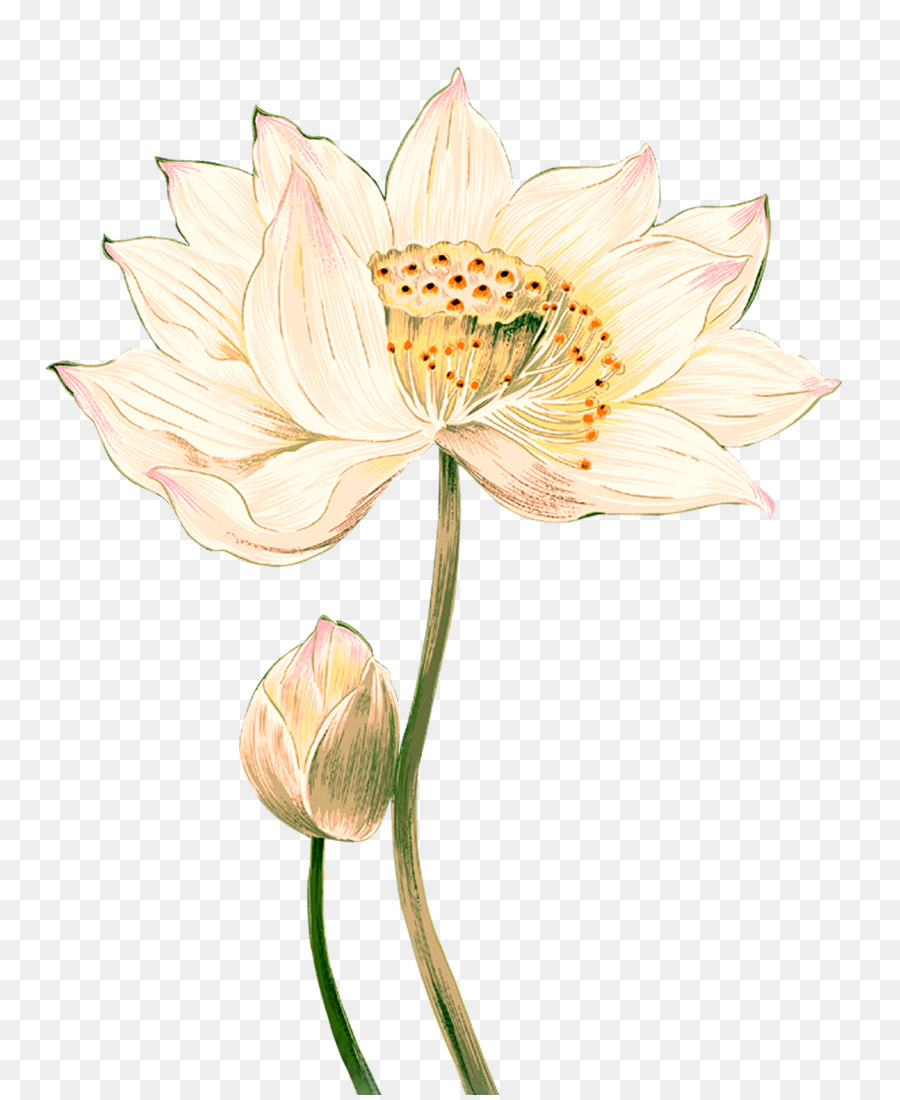 Nelumbo nucifera ink wash painting chinese painting lotus creative nelumbo nucifera ink wash painting chinese painting lotus creative izmirmasajfo