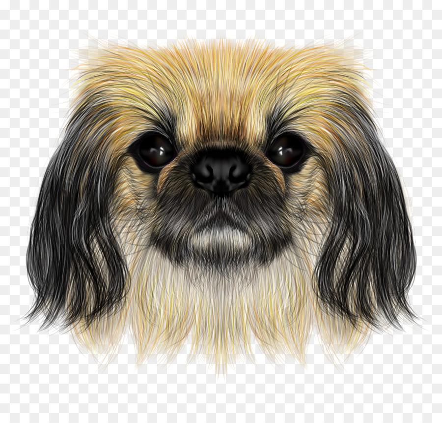 Shih tzu pekingese yorkshire terrier chinese crested dog puppy.