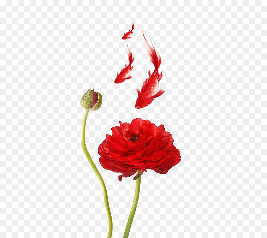 Ranunculus asiaticus meadow buttercup poppy red petal red lotus ranunculus asiaticus meadow buttercup poppy red petal red lotus mightylinksfo