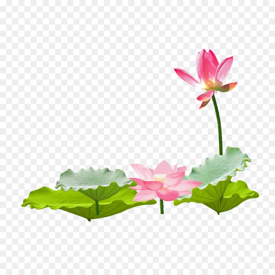 Nelumbo nucifera leaf lotus lotus leaf album png download 1024 nelumbo nucifera leaf lotus lotus leaf album mightylinksfo