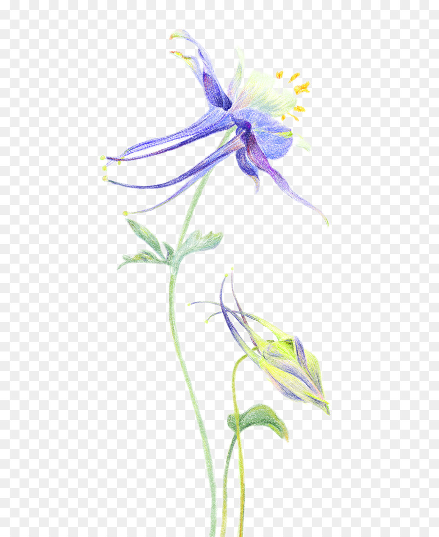 Petal orchids flower columbine flower painted png download 658 petal orchids flower columbine flower painted izmirmasajfo