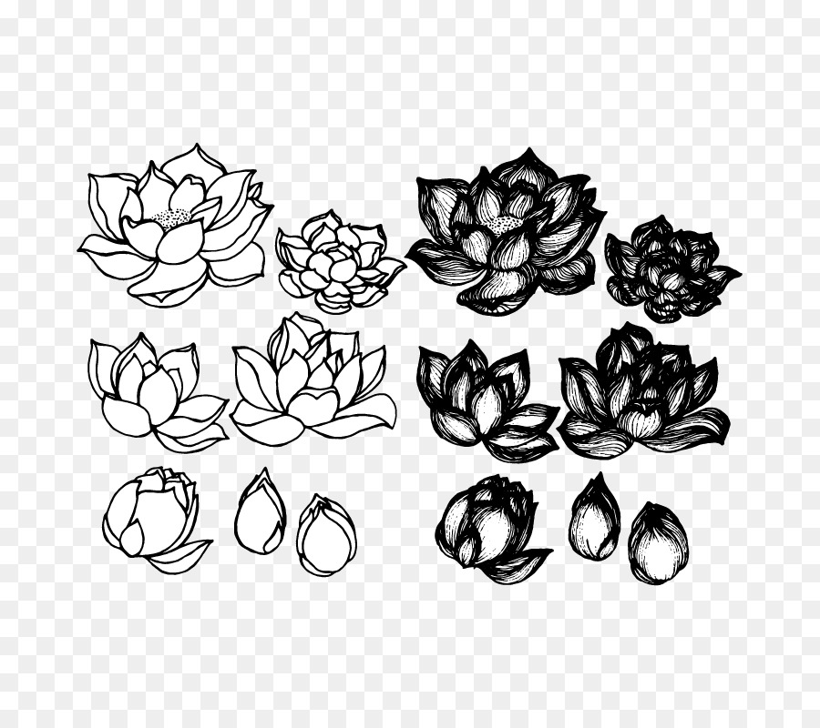 Lotus cars drawing croquis sketch lotus sketches and drawings png lotus cars drawing croquis sketch lotus sketches and drawings mightylinksfo