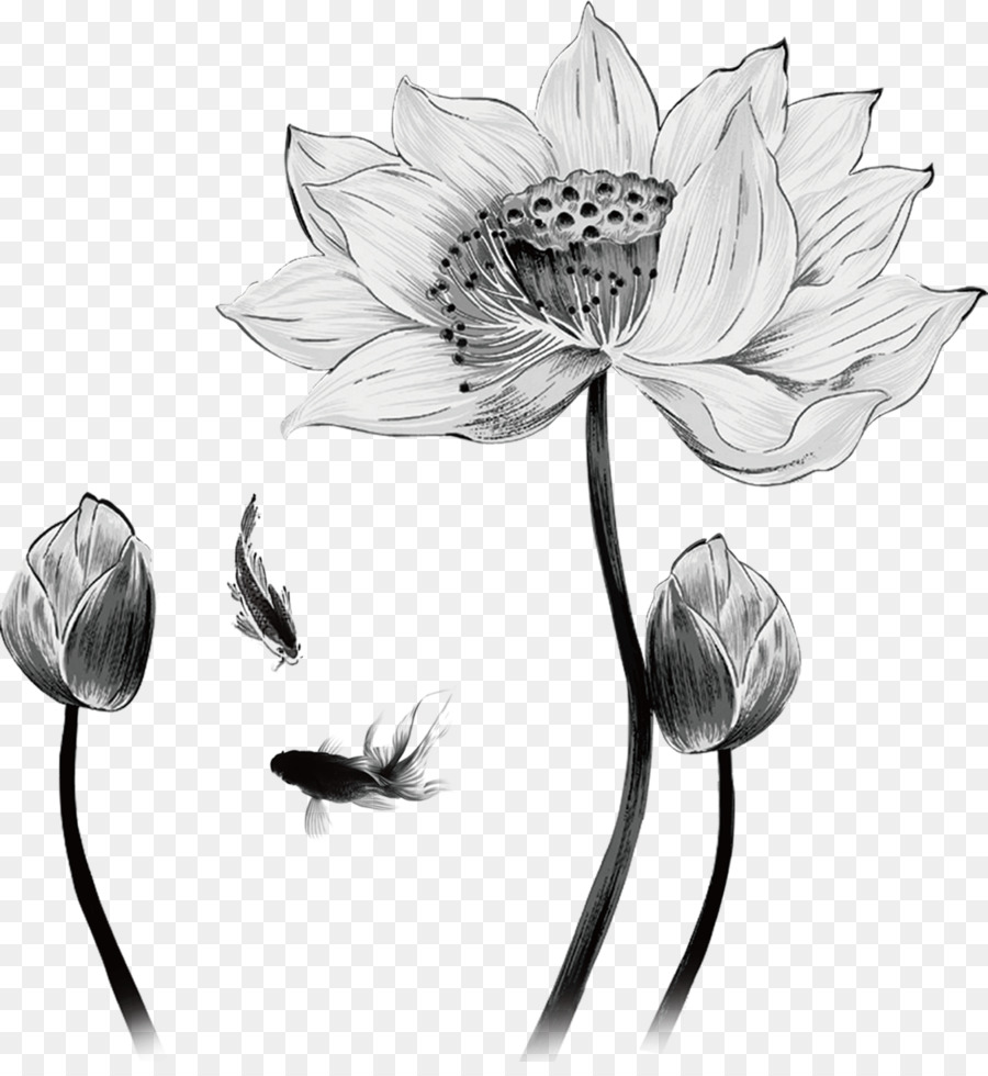 Drawing nelumbo nucifera hand painted sketch lotus decoration png drawing nelumbo nucifera hand painted sketch lotus decoration mightylinksfo