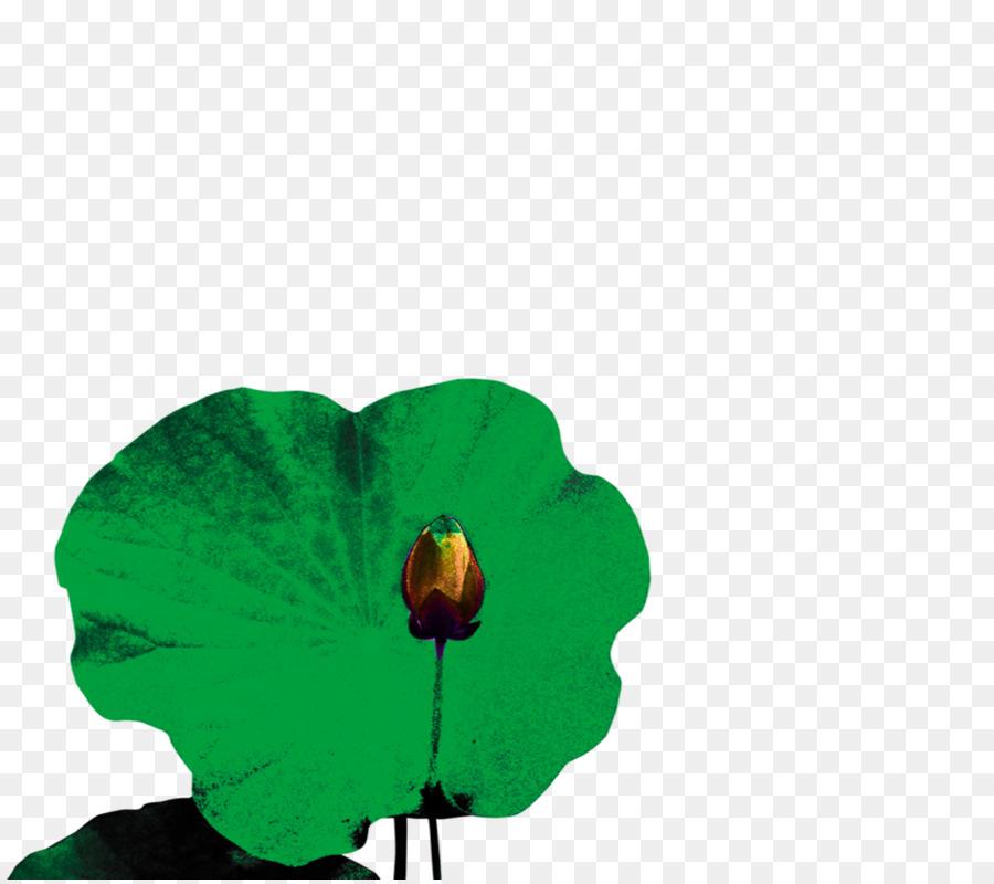 Hoja de Nelumbo nucifera pintura a la Acuarela - Lotus png dibujo ...