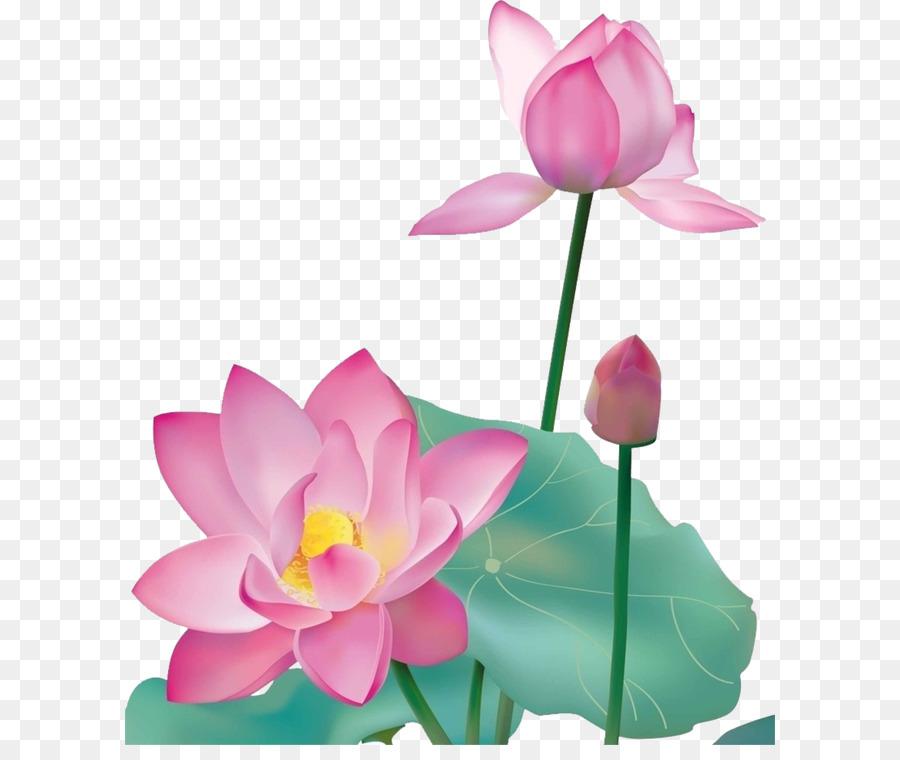 Nelumbo nucifera graphic design lotus lotus leaf album png nelumbo nucifera graphic design lotus lotus leaf album mightylinksfo