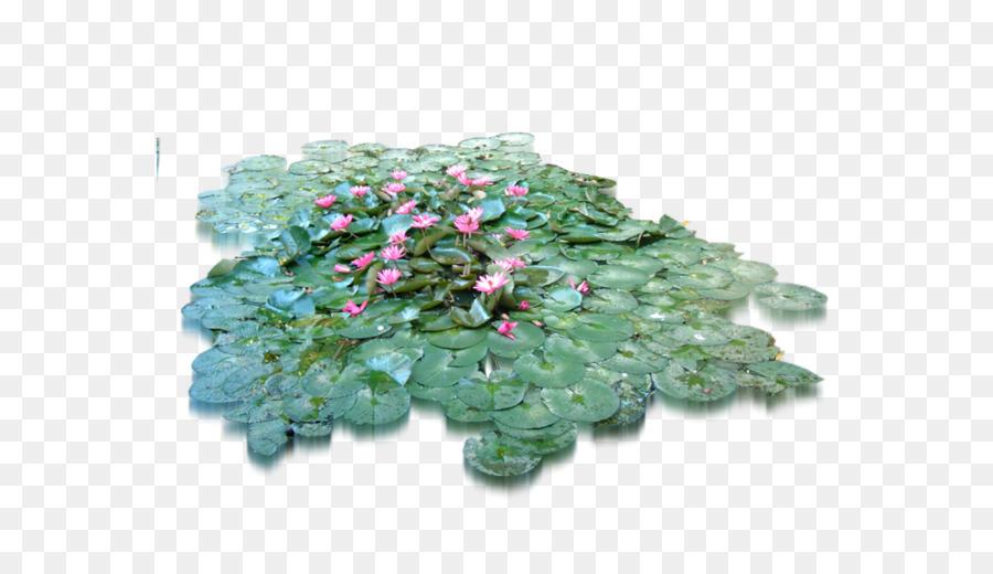 Flower Tree Herb Lotus Leaf Png Download 19201079 Free