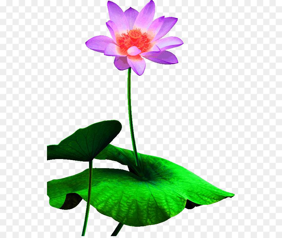 Download Poster Lotus Segar Daun Teratai Dekorasi Pola Unduh
