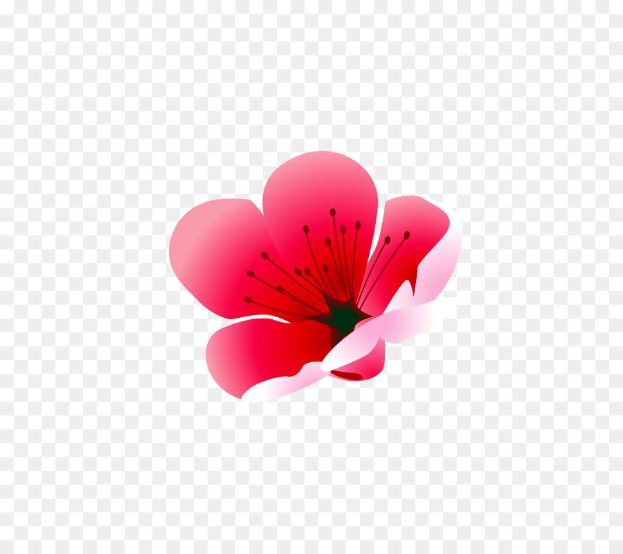 Pink Plum Blossom Dessin Fleur Rose De Prune Telechargement Png