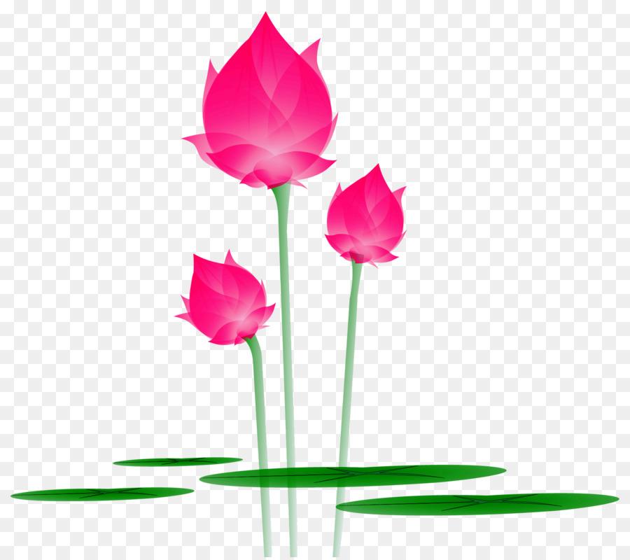 Lily Air Nelumbo Nucifera Bunga Gratis Untuk Menarik Kartun Lotus