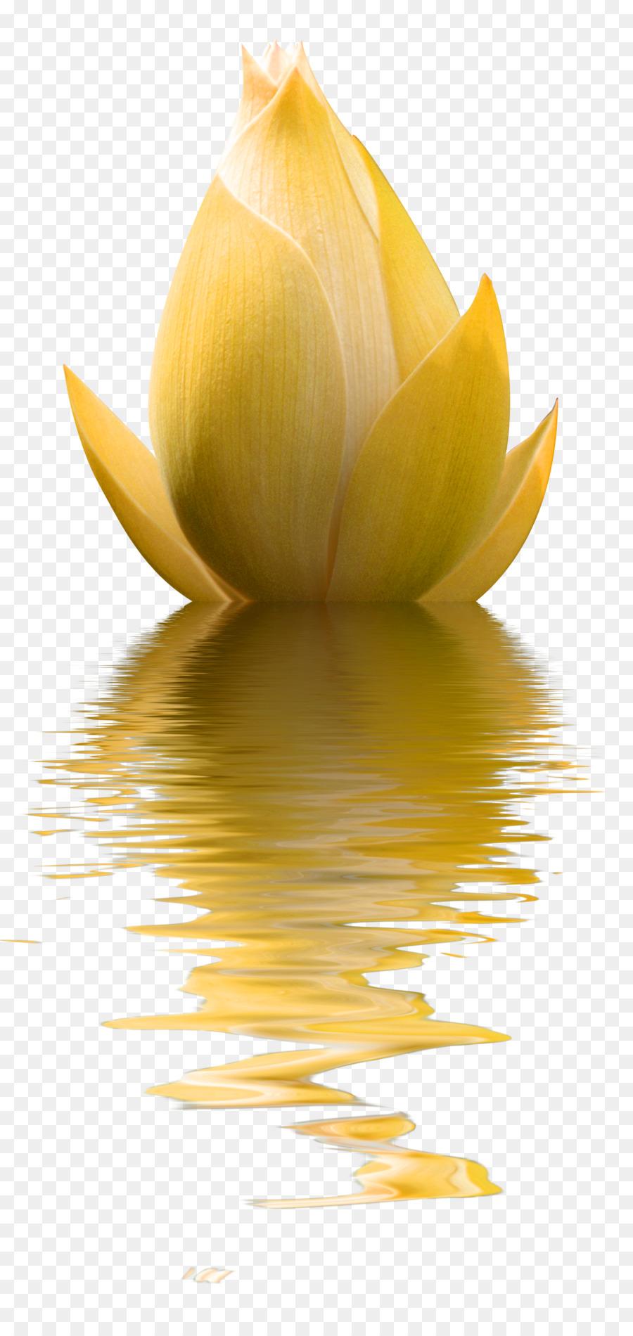 Flower Photography Yellow Minimalist Lotus Decoration Pattern Png