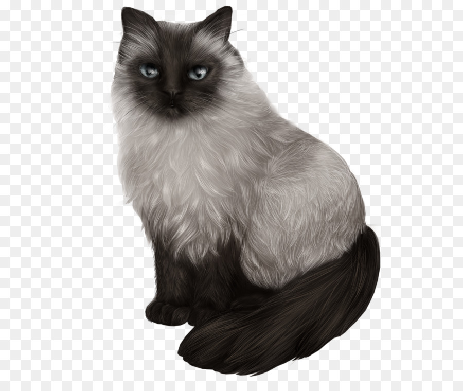 himalayan cat balinese cat siamese cat ragdoll asian semi longhair