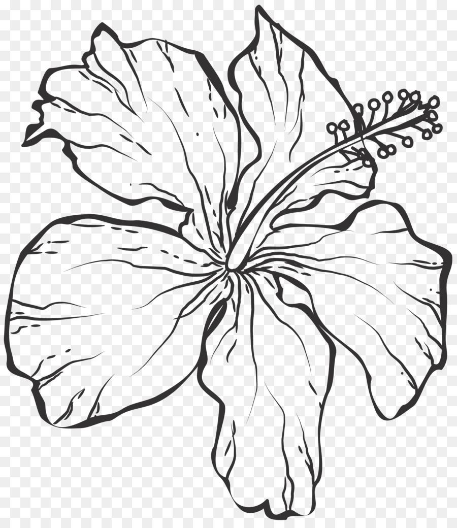 Line Art Black And White Drawing Line Drawing Flowers Png Download
