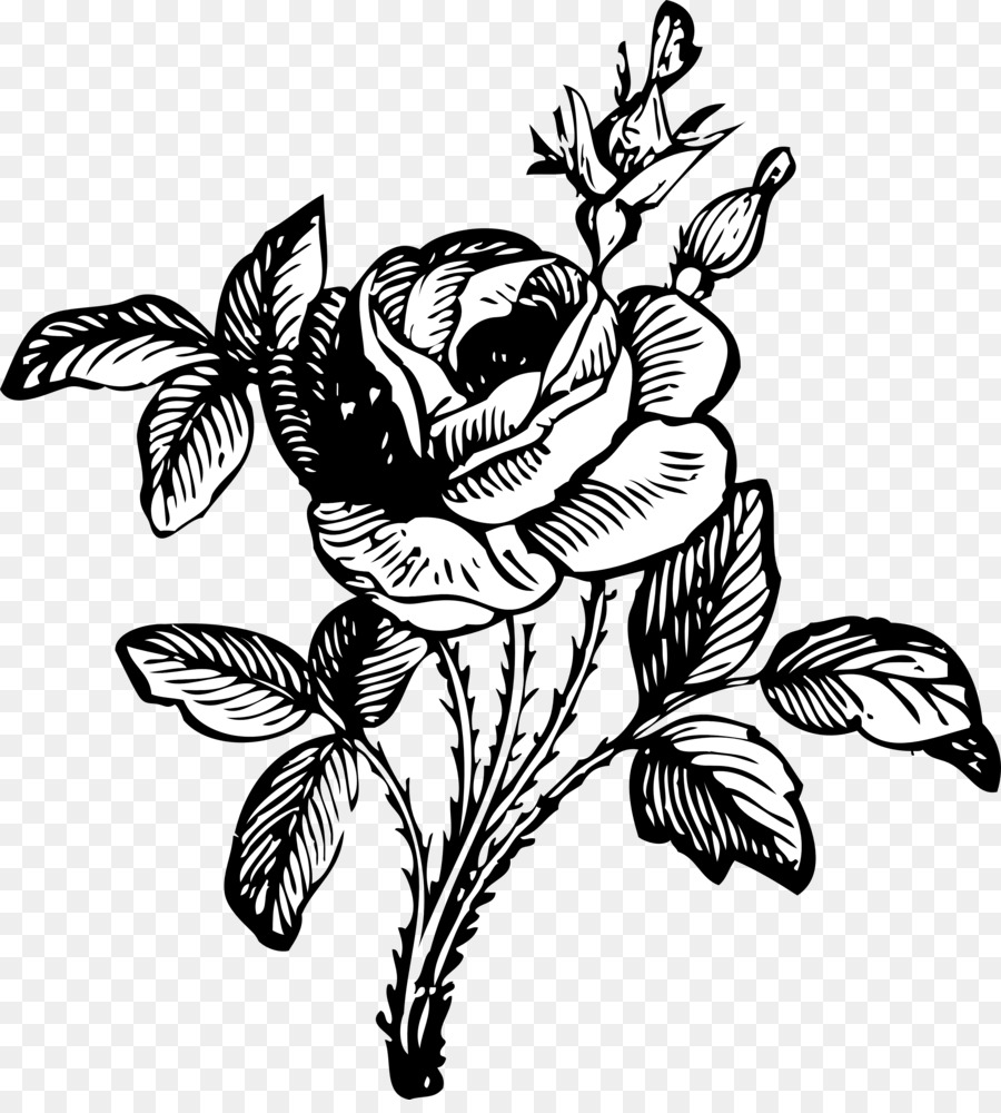 Rose Flower Drawing Clip Art Black And White Rose Drawings Png