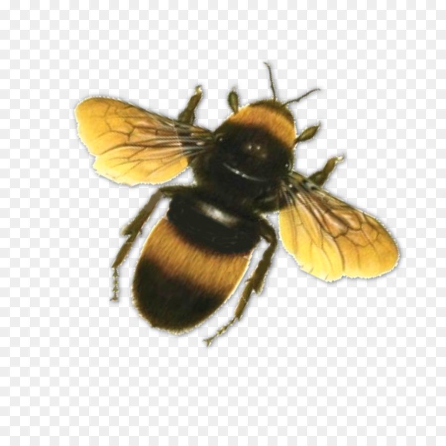 La miel de abeja Mariposa Clip art - Abeja Formatos De Archivo De ...