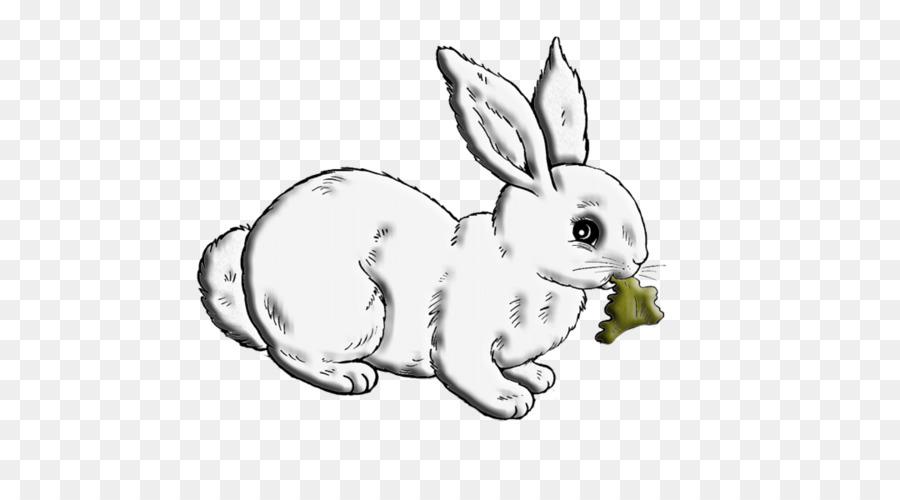 Doméstica conejo Blanco de Conejo, Liebre, conejo Europeo - De ...